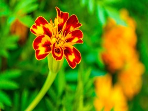 Flor con bonitos pétalos