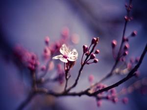 Postal: Una sola flor en la rama