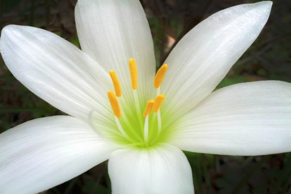 Una bella flor blanca