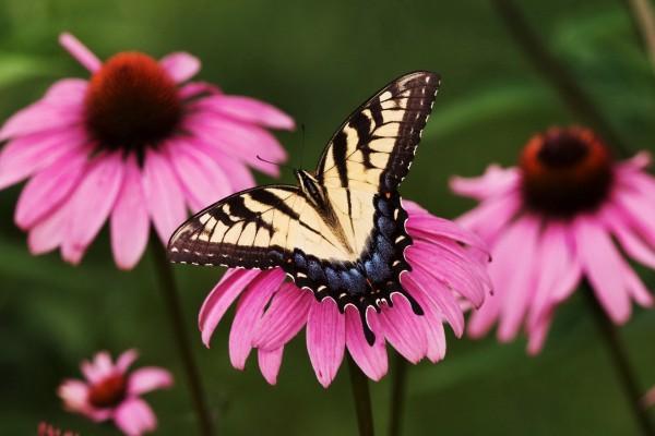 La mariposa posada en la flor