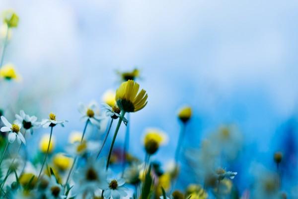 Florecillas silvestres amarillas y blancas