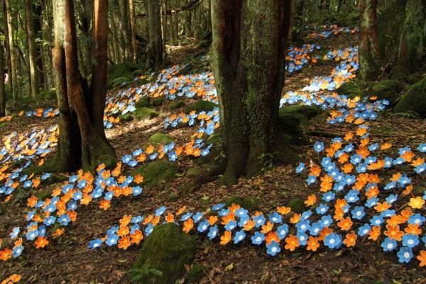Dando color al bosque