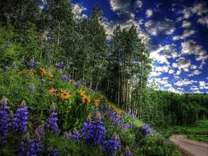 Flores y árboles cerca del camino