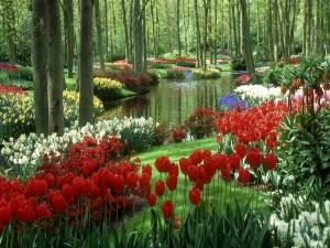 Postal: Preciosas flores junto al estanque