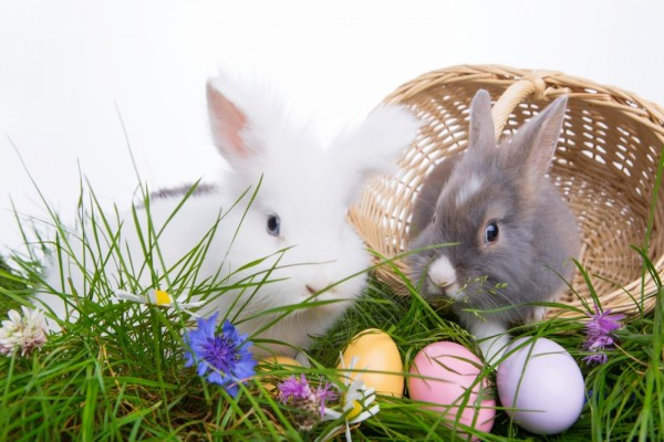 Dos lindos conejitos, junto a huevos de Pascua