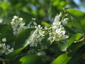 Planta con florecillas blancas