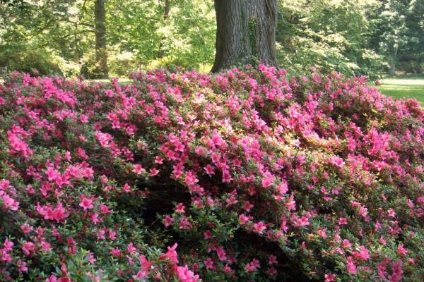 Flores junto al árbol