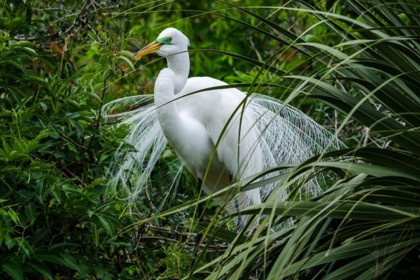 Garza blanca entre la hierba verde
