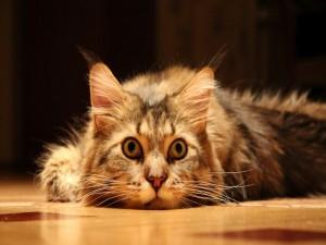 Atractivo gato esperando la comida