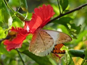 Mariposa en una flor roja