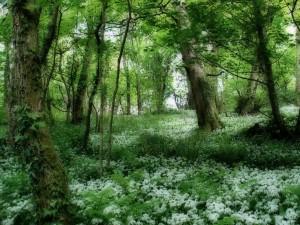 Postal: Árboles y la vegetación del bosque