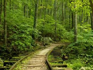 Vía en el interior del bosque