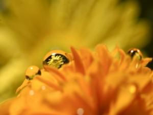 Flor reflejada en la gota de agua