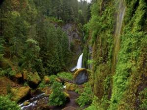 Puente cerca de la cascada