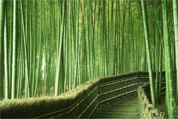 Escaleras en el bosque de bambú