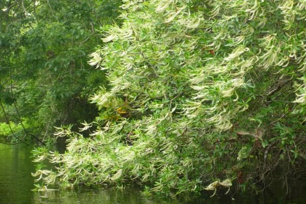 Planta acariciando el agua