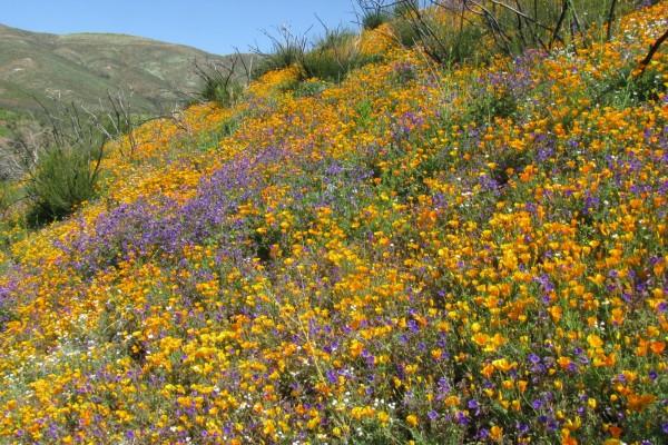 Ladera con abundantes flores