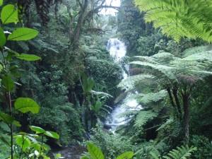 Cascada entre abundante vegetación