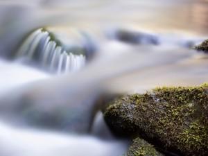 Roca con musgo en el agua