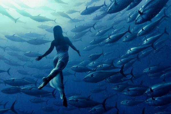 Nadando con los atunes