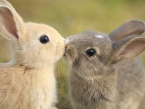 """Conejos besándose el 13 de Abril """"Día Internacional del Beso"""""""