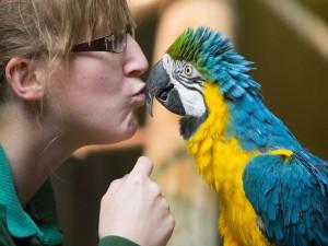 Postal: Besando al loro: Día del Beso