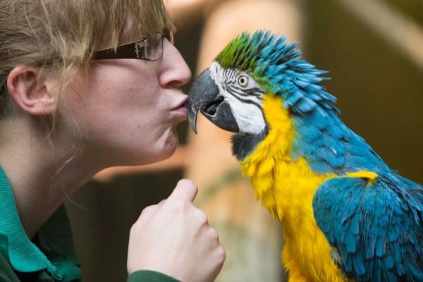 Besando al loro: Día del Beso