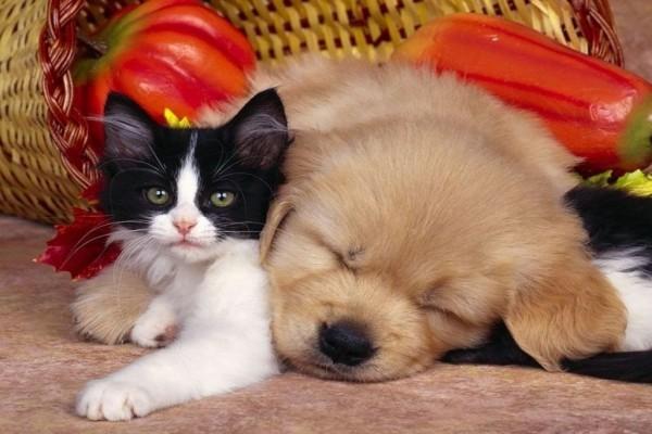 Hermosa amistad entre un perrito y un gatito