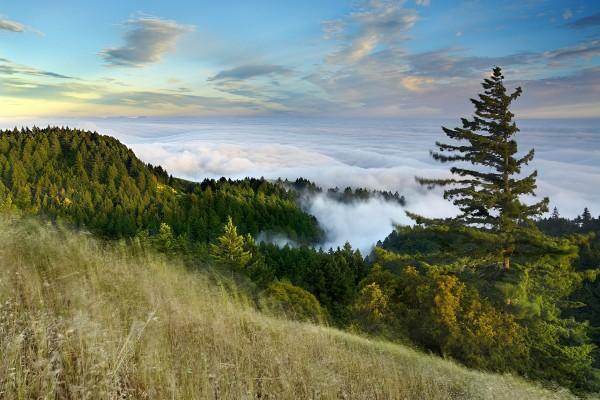 Mar de nubes adentrándose en el pinar