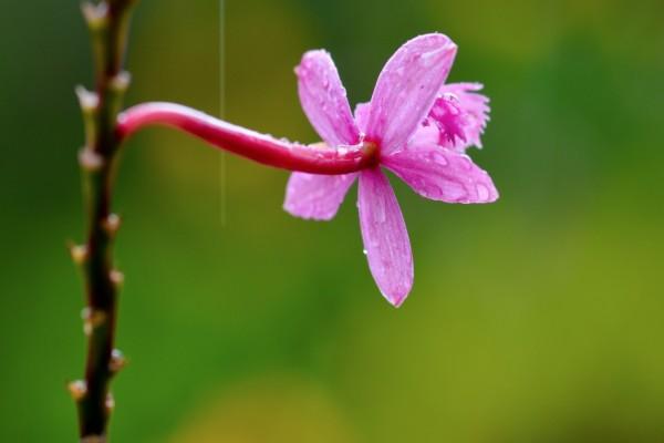 Flor rosa en la rama
