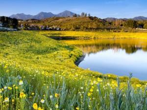 Postal: Pequeño lago en el campo
