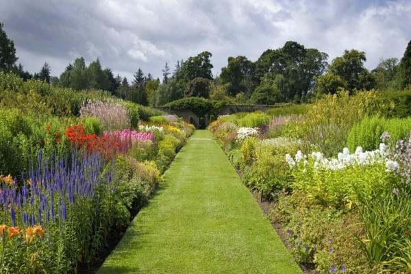 Camino rodeado de hermosas flores multicolor