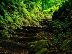 Camino verde por el bosque