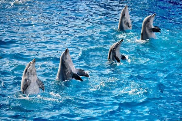 Delfines en el mar azul