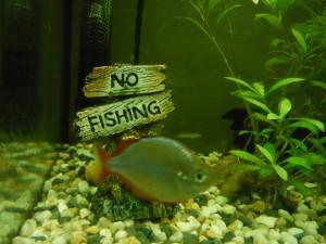 ¡No Pescar!