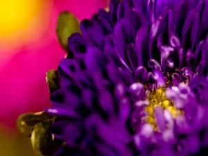 Flor con muchos y pequeños pétalos