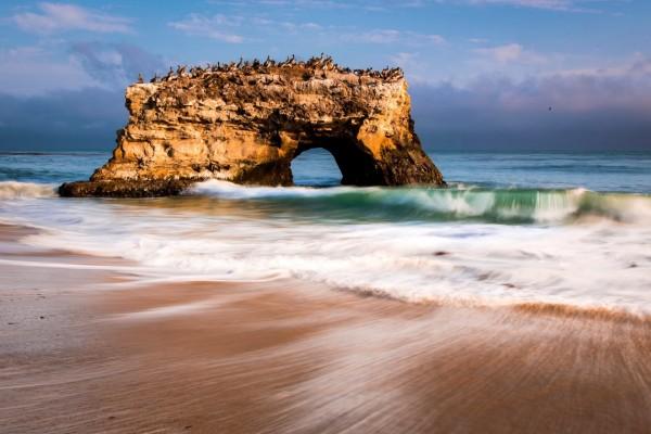 Pelícanos sobre la roca en el mar