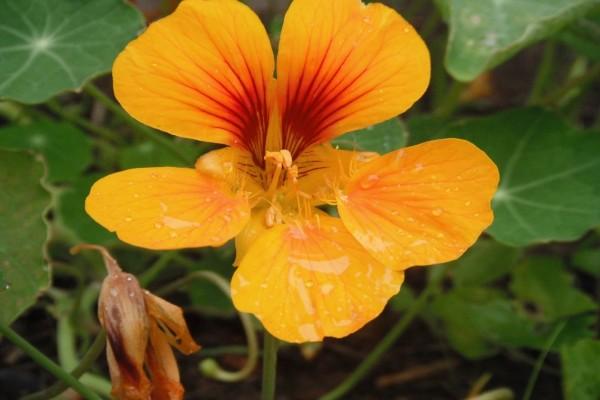 Bonita flor con pétalos delicados