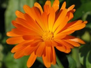 Postal: Brillante flor naranja