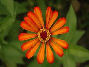 Postal: Flor con pequeñas flores