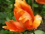Flor con bonitos pétalos naranjas