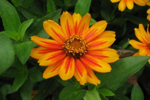 Flor con pétalos de color naranja