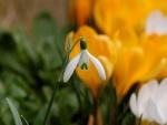 Bella flor blanca