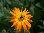 Flor naranja con un invitado