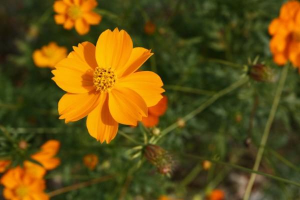 Una bonita flor de color naranja