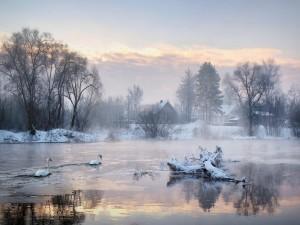 Cisnes en un lago congelado