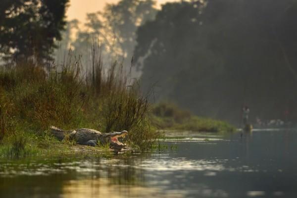 Cocodrilo a orillas del río