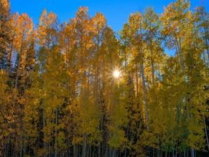 Los rayos del sol en otoño, entre los árboles