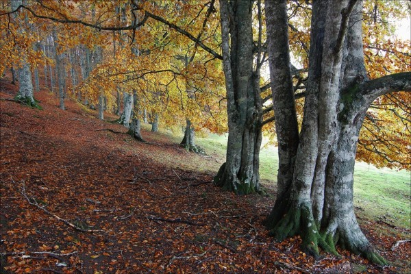 Árboles con las hojas caídas en otoño
