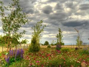 Postal: Extensión de campo, con flores y árboles